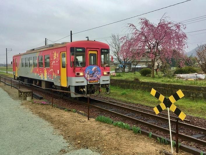 播磨下里駅枝垂れ桜と列車 - コピー
